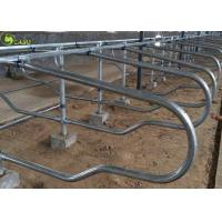 Cattle Livestock Jersey Galvanized Double Cow Free Stall Dairy Farm Equipment Manufactures