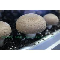 Buy cheap FRESH PORTABELLA MUSHROOM from wholesalers