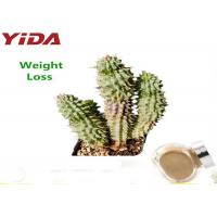 Brown Yellow Natural Weight Loss Powder Herbal Hoodia Cactus Plant Extracted Manufactures