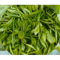 China Low Price Green Tea Extract on sale