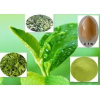Healthy Green Tea Polyphenols , 84650-60-2 Green Tea Extract For Weight Loss Manufactures