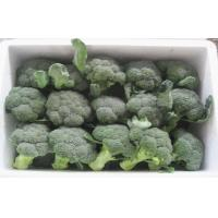 China 11 - 13cm Diameter Steaming Organic Frozen Broccoli With Nutritional Value on sale
