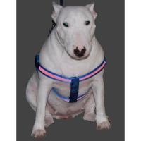 White LED Flashing Pet Harness With Cute Naughty Dog Pattern Manufactures