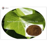 20% Hederacosides CAS 14216 03 6 Ivy Leaf Extract For Dry Cough Manufactures