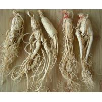 Supply Natural Ginseng Extract 80% Ginsenosides UV Manufactures