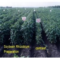 Buy cheap Soybean Rhizobium Preparations Effect of Product Application from wholesalers