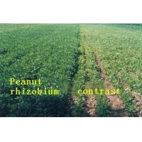 Buy cheap Peanut Rhizobium Preparations Effect of Product Application from wholesalers