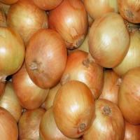 China Raw Cleaned Onion wholesale