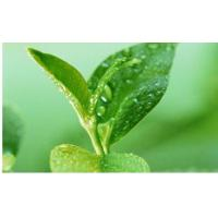 Green Tea Polyphenols Manufactures