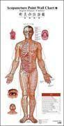 Acupunctrue Point Wall Chart (English-Chinese) Manufactures