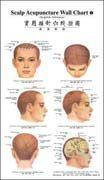 Scalp Acupunctrue Wall Chart (English-Chinese) Manufactures