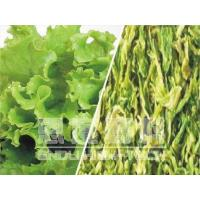 Freeze-dried Lettuce Manufactures
