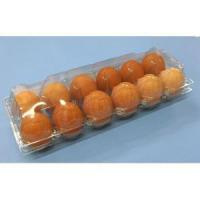 Ovotherm Glass Clear 12-Egg Carton, w/No Label Manufactures