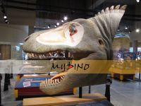 Dinosaur Head Manufactures