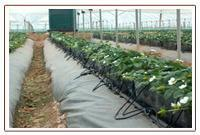 COCO PEAT GROW BAG Manufactures