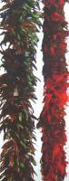 Coque feather boa Manufactures