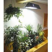 China HED plant growth lamp on sale