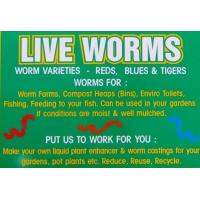 Compost Worms For Sale - 500 Manufactures