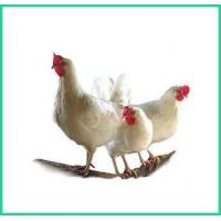 Natural Chicken Feed, Texas Natural, Soy Free, Non GMO, Chick Start ZWE-3 Manufactures