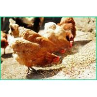Hen/Layer Feed Formulation Feeders ZWE-6 Manufactures
