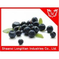 Immunity Enhancers Acid berry extract powder Company Manufactures