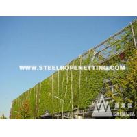 Stainless Steel Cable Mesh Green plant climbing rope netting Manufactures