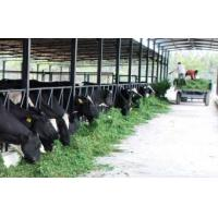 China Steel Prefabricated Cattle Housing on sale