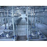 China Cow Milking Parlor System on sale