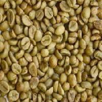 Robusta Coffee S16 Manufactures