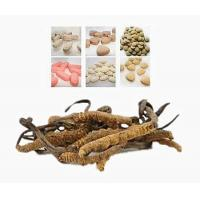 China new product Anti-fatigue cordyceps tablets GMP certified OEM cordyceps sinensis extracts Tablet on sale