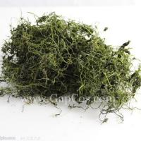 High Quality Natural Gynostemma Extract--Gypenoside
