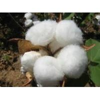 Raw Cotton Manufactures