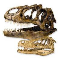 Complete Catalog Fossils Dinosaurs & Fossils Manufactures