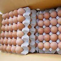 Chicken Eggs Manufactures