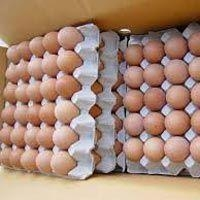 Quality Chicken Eggs for sale