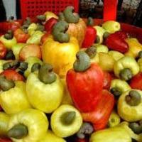Raw Cashew Nuts Manufactures