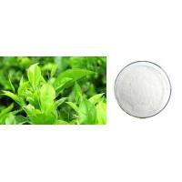 China Plant Extracts (by Function) Green Tea Extract - EGCG on sale