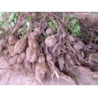 Buy cheap Nicotine sulfate from wholesalers