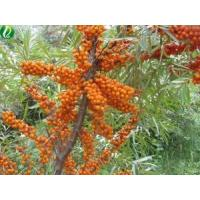 Organic Seabuckthorn Berry Oil Essential Oil Manufactures