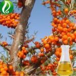 Seabuckthorn Seed Oil Essential Oil Manufactures