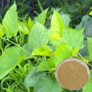 Quality Natural Mulberry Leaf DNJ Essential Oil for sale