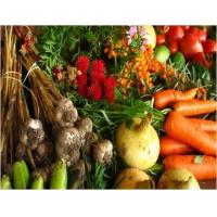 Agriculture Agricultural Micronutrients  - Global Market Outlook (2016-2022) Manufactures