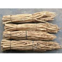 China Astragalus mongholicus extract on sale
