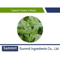 China Figwort flower extract 10:1,Rhizoma Picrorhizae ,coptis chinensis extract, Goldthread on sale