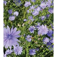 Browse By Category Chickory Manufactures