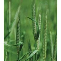 Browse By Category Rye Grain, Elbon Manufactures