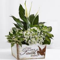 China Centerpieces & Plants Peaceful White Garden on sale