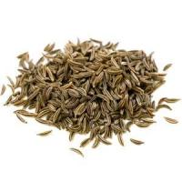 Buy cheap Caraway Essential Oil from wholesalers