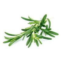 Rosemary Essential Oil Manufactures
