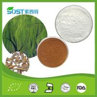 China Weight-losing Product Willow Extract on sale